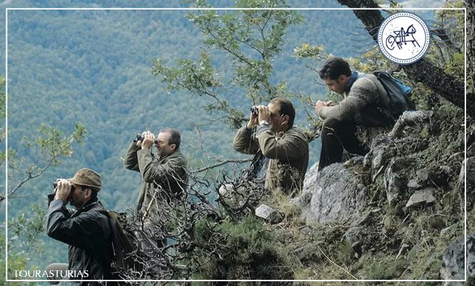 La Berrea en Asturias, un espectáculo salvaje.