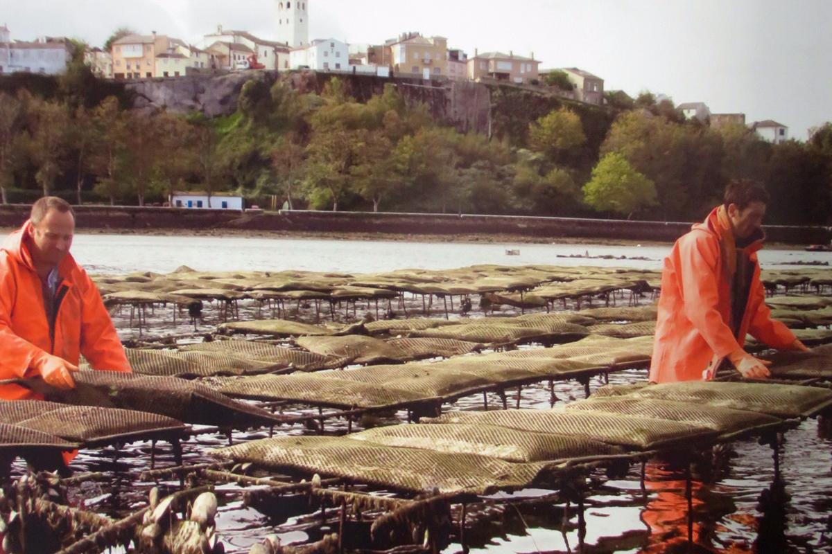 Visita guiada al cultivo de ostras en Asturias.